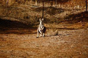 Lloguer de cotxes Tamworth, Austràlia