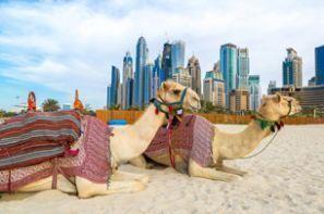 Llogar un cotxe Emirats Àrabs Units