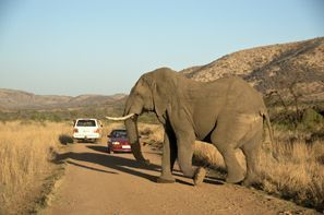 Lloguer de cotxes Klerksdorp, Sud-àfrica