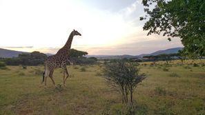 Lloguer de cotxes Rustemburg, Sud-àfrica